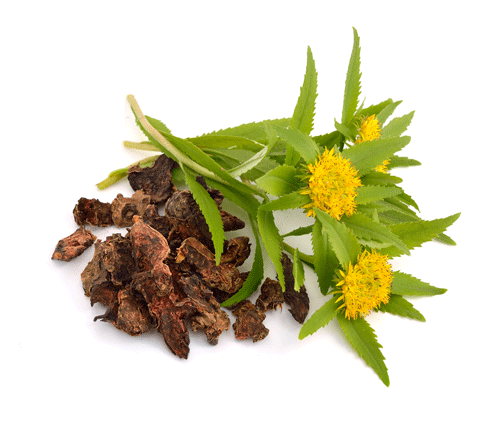 Rhodiola-Root.png