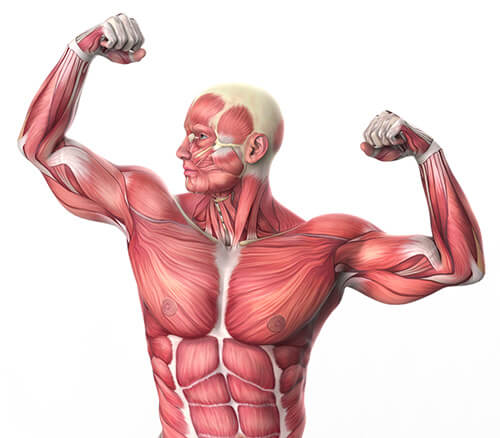 how to avoid losing muscle mass